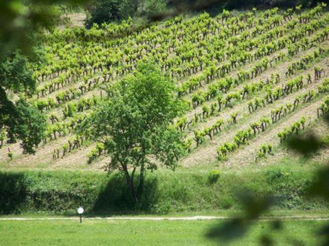 Location vacances prestige d'un mas en Provence. Au cœur du parc régional du Lubéron, sur un domaine privé de 20 ha magnifique maison provençal offrant une totale intimité et de superbes vues sur la village d'Ansouis et les montagnes du Lubéron. L'en...