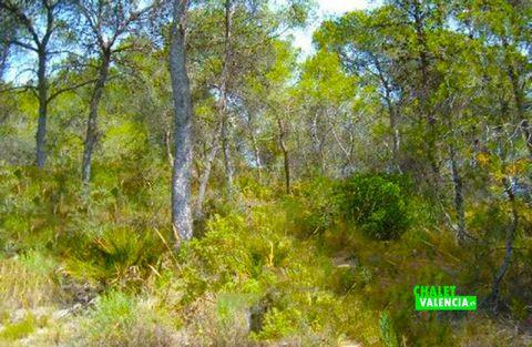 Chalet con total privacidad junto al pueblo de L'Eliana, a solo 1500 metros de la parada de Metro Valencia en el pueblo de La Eliana. La parcela dispone de 18.350m2, ampliables a 19.000m2, con zona verde con pinos a modo de bosque mediterráneo . La p...