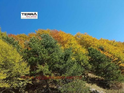 TOP PROPERTY! PANORAMA AND FRESH AIR! TERRA REAL ESTATE presents a regulated plot of land with an area of 8000 sq.m. The property is located in the resort village of Chiflik, rich in thermal springs! The property has electricity and water, as well as...