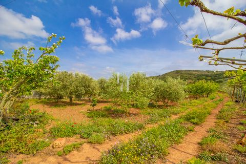 Located in Vila do Bispo. We are faced with an agricultural land with practically 1 hectare of size. The quality of the land allows the cultivation of several fruit trees, such as carob trees, fig trees, olive trees and almond trees. The terrain is s...
