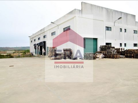Agricultural warehouse of 559M2. Inserted in batch of 13.800 m2. In very good condition. Ready to work. With 4 cargo doors and discharges. Cold room and men's and women's locker rooms. Energy Rating: Exempt #ref:150190224