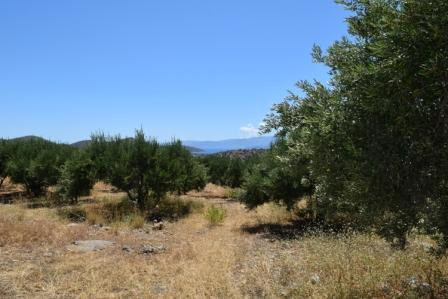 Elounda Plot of land with lovely mountain and sea views. It is 2.000m2 and has the ability to build up to 200m2. The water and electricity are nearby. Lastly, there is street parking.